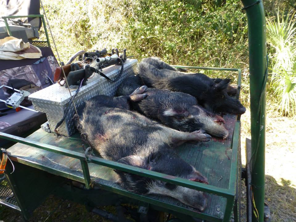 Hog Hunt - Florida - January 2014