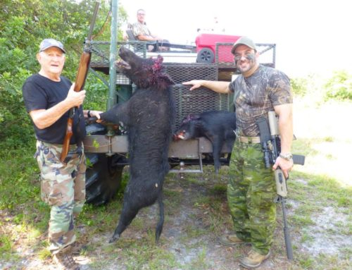 May Hog Hunt – Florida